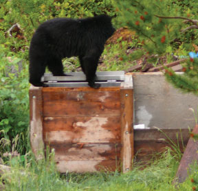 bear on composter